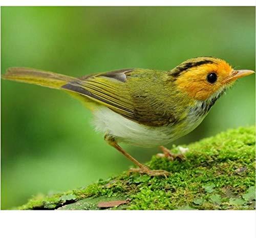 Rompecabezas de placer, 1000 piezas, prado verde pájaro adulto ocio entretenimiento niños juguetes educativos