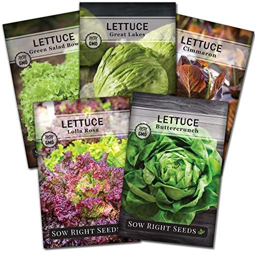 母猪右种子 - 莴苣种子征集种植 -  Buttercrunch,大湖,Cimmaron,沙拉碗,并Lolla罗莎品种非转基因种子传家宝对植物家庭菜园 - 伟大的礼物
