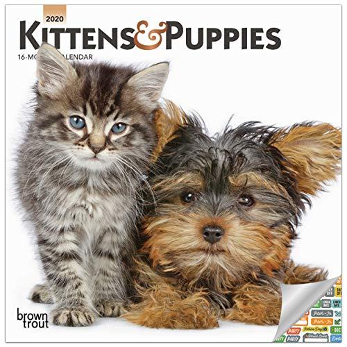 Kittens and Puppies Calendar 2020 Animal Friends Wall Calendar with Over 100 Calendar Stickers