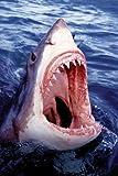 1art1 52903 Haifische - Der Große Weiße Hai Poster 91 x