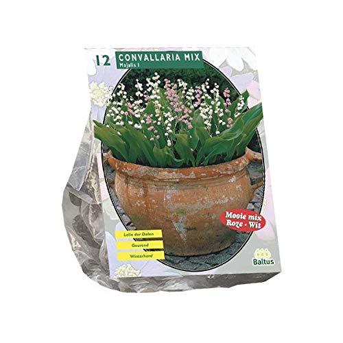 Maiglöckchen   Convallaria Majalis Mix   Weiß/Rosa   12 Rhizomen/Wurzel   Sommerblüher