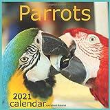 Parrots: Calendar 2021 Wall Calendar Monthly Calendar 12 Month