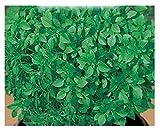 Semina: da febbraio a luglio Si coltiva facilmente sia in piana terra che in vaso Predilige terreni leggeri e fertili, Foglie piccole molto aromatiche. Pianta che forma una palla compatta voluminosa.