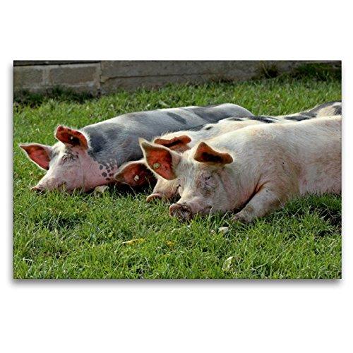 Premium - Lienzo (120 x 80 cm, horizontal, 3 vinos de sauce en la pradera, imagen sobre bastidor, imagen sobre lienzo auténtico, impresión sobre lienzo (CALVENDO), diseño de animales calvendo