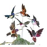 Set of 6 Hummingbird Picks Multicolored Assortment Six Different Colors
