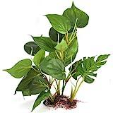 DIGIFLEX Decoración Hojas Verdes para Acuario 20cm Plantas Artificiales para Acuarios Que Lucen como Plantas Verdaderas