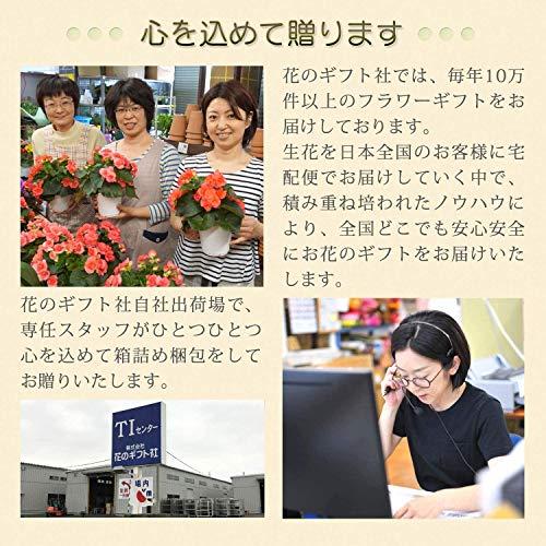 花のギフト社りんどう鉢植え白寿植花リンドウ鉢植えりんどうりんどう鉢リンドウの花花鉢