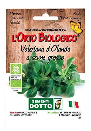 Sdd O.BIO_VALERIANA D'OLANDA Seme Grosso Semi, 0.02x15.5x10.8 cm