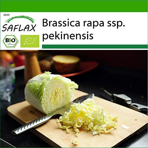 SAFLAX - Ecológico - Repollo Chino - Granate - 40 semillas