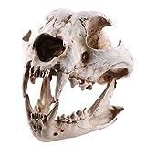 FLAMEER Tête Anatomique Chien Canine Crâne Os Dessin Squelette Réplique Figurine B