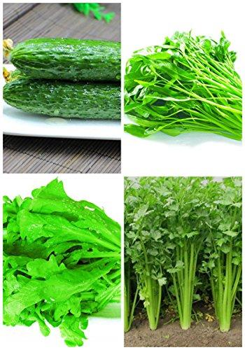 NOUVEAU haute qualité biologique » santé Germination 95% + 6 Groupes Pour Select Graines de légumes 4 en 1 Lot Garden 4
