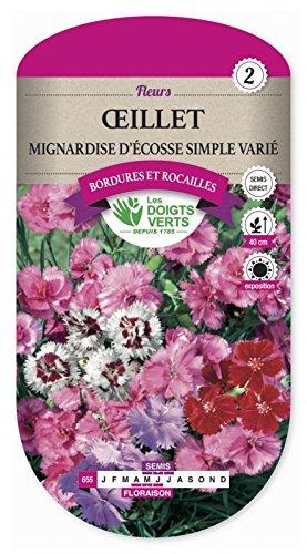 Oeillet Mignardise D'Ecosse Simple Varié