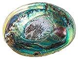 mimiliy 12-1 4 CM Conchas de abulón Natural Pulido Conchas Marinas del hogar Decoración de Acuario Decoración de jabón artesanía Hecho a Mano