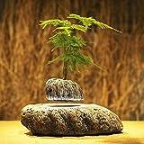 Lucy's Home Levitating Air Bonsai Pot -Magnetic Levitation