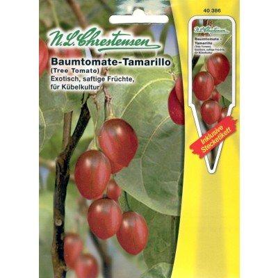Baumtomate Tamarillo