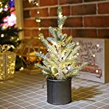 Emadgift Lighted Mini Tree 12 Inch with 15 Warm Whited LED Lights USB Powered for Winter Decor Hone Party and Wedding Holiday