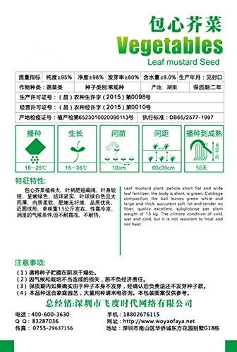 SVI Semences Kow Choi Allium Tuberosum 400pcs pour l'ensemencement, semences de légume orientales aile gau Choy, cebolletas de l'ail puerro chinois semences