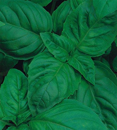 Just Seed???Bio herbes???Basilic???italien classique???300?paquets de graines???Economy