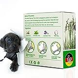 IMG-1 collare antipulci per cani prevenzione