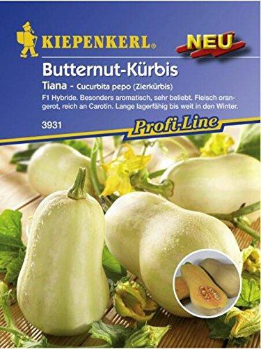 Cucubita pepo Zierkürbis Butternut Kürbis Tiana