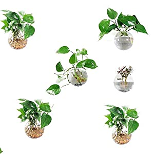 Orimina Pack of 6 Glass Planters Wall Hanging Planters Round Glass Plant Pots Hanging Air Plant Pots Flower Vase Air Plant Terrariums Wall Hanging Plant Container, 12 cm Diameter ¡­