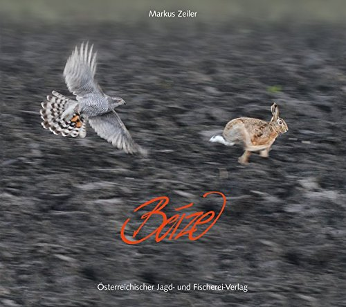 Beize: Mit Greifvögeln auf der Jagd