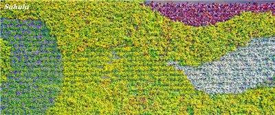 Mélanger Boston Seeds 100% vrai Parthenocissus tricuspidata semences Plantes d'extérieur QUASIMENT soins décoratifs Escalade usine 100 Pcs 3