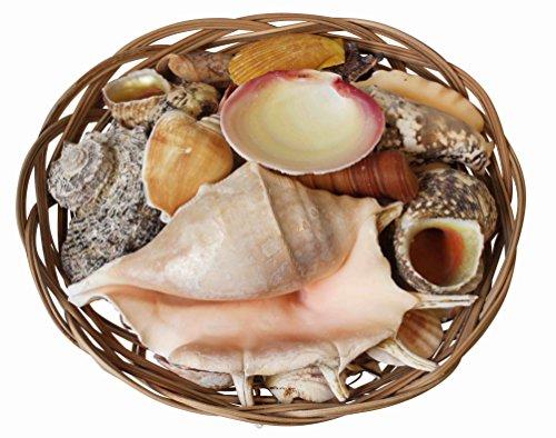 Homeshop3000 Surtido de Conchas Tropicales en una Cesta de Mimbre Decorativa