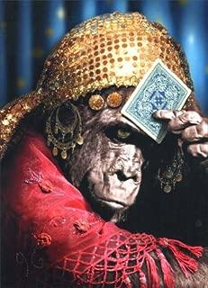 Best chimpanzee birthday card Reviews