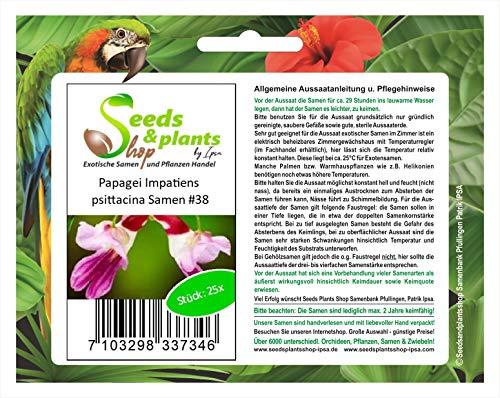 Stk - 25x Papagei Impatiens psittacina Rarität Blumen Pflanzen - Samen #38 - Seeds Plants Shop Samenbank Pfullingen Patrik Ipsa