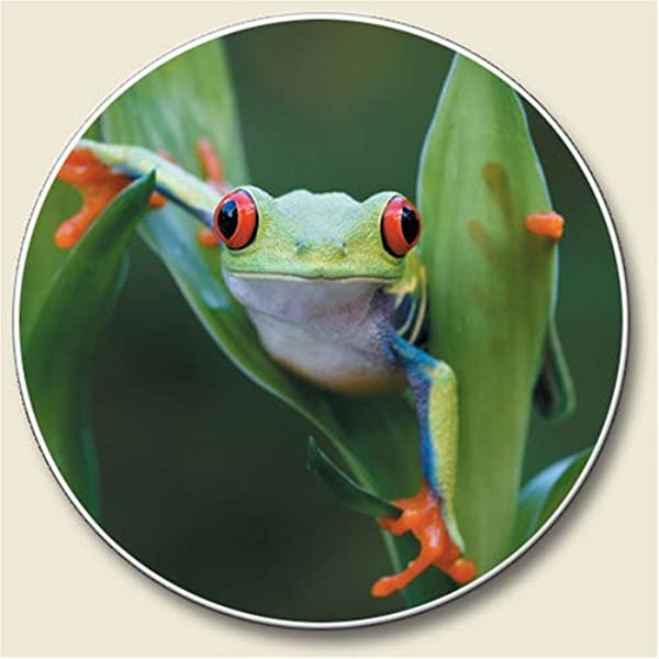 Frog Auto Coaster Single Coaster For Your Car