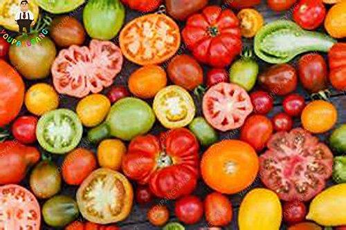 100pcs Violet Tomates cerises Graine Fruits et légumes Balcon Bonsai Seed Facile à cultiver jardin Plantes en pot blanc
