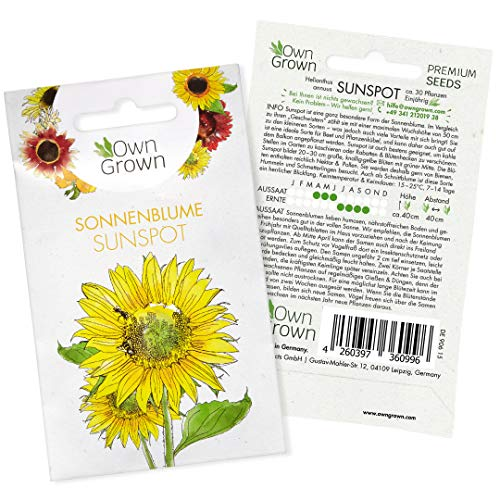Sonnenblumen Samen Sunspot (Helianthus annuus): Premium Sonnenblumen Saatgut für Sonnenblume Mini Sorte, Sonnenblume Saat zur Anzucht von ca. 30 Pflanzen – Insektenfreundliche Blumensamen von OwnGrown