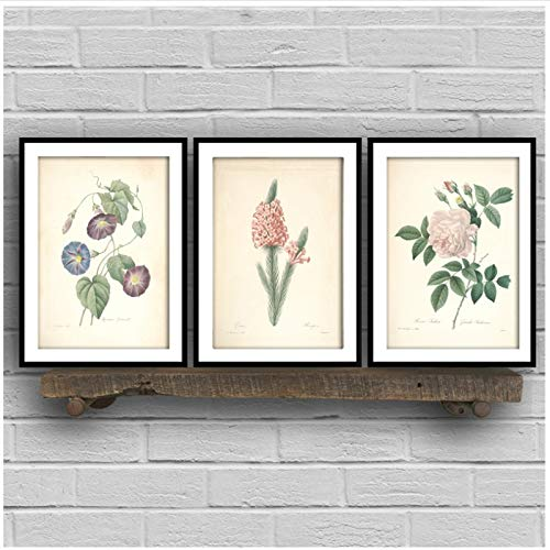 Vintage Flowe Wall Art Canvas Poster kruid rozemarijn salie tijm canvas schilderij retro plant fruit foto's Home Office decor-40x50x3Pcscm geen frame