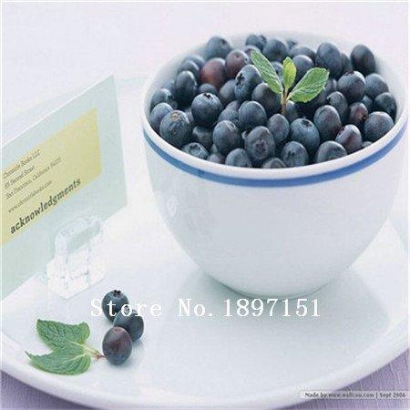 Blanc: Big Sale Garden 100 Blue Seeds Berry Vaccinium myrtillus corymbe du Nord Blueberry Graines Bush corymbosum Fruit Graines