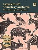 Esqueletos de Animales y Anatomía: Un Archivo de Imágenes