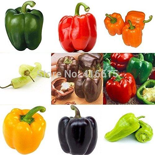 Heirloom Thai Sun Hot Pepper Capsicum annuum ornemental Chili Graines, Paquet professionnel, 100 graines / Pack, Mini Hot Pepper Seeds