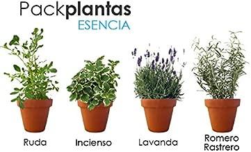 Amazon.es: flores secas aromaticas