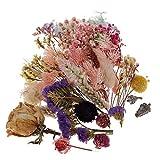 chiwanji Fleur Séchées Pressées Mélangé Scrapbooking DIY Décoration Suspendu Cartes de Voeux Bricolage en Résine