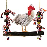 Kylewo Hühnerschaukel mit Hängespielzeug aus Naturholz - Hühner kauen Spielzeug mit Glocken für Huhn Vogel Papagei Pet Training