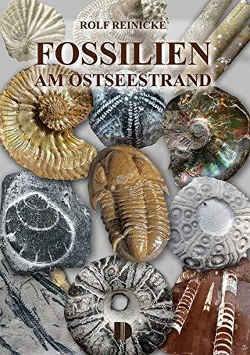 Preisvergleich Produktbild Fossilien am Ostseestrand