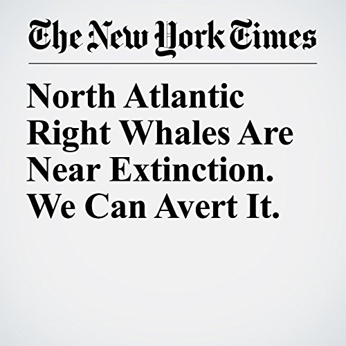 North Atlantic Right Whales Are Near Extinction. We Can Avert It. copertina