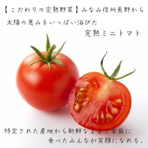 美味しい野菜 全国からお届け 完熟 ミニトマト 3kg箱