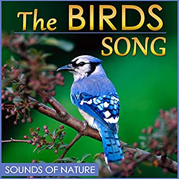 The Birds Song. Sound of Nature