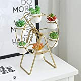 Plant Stand with 6 Pots Succulent - White Modern Decorative Ceramic Flower Planter Plant Pot with Drainage - Home Office Desk Garden Mini Cactus Pot Indoor Decoration (Gold)