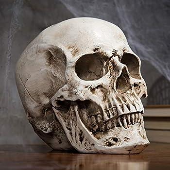 MyGift 6-Inch Decorative Replica Realistic Human Skeleton Head Bone Skull Model Statue