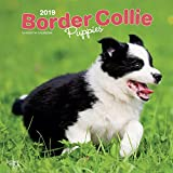 Border Collie Puppies - Border Collie Welpen 2019 - 18-Monatskalender mit freier DogDays-App (Wall-Kalender)