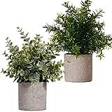 FagusHome Plantas Artificiales en Macetas 2 Piezas Mini Plantas de Eucalipto Rosemary Plants Artificiales en Macetas Plástico para Decoración (A)