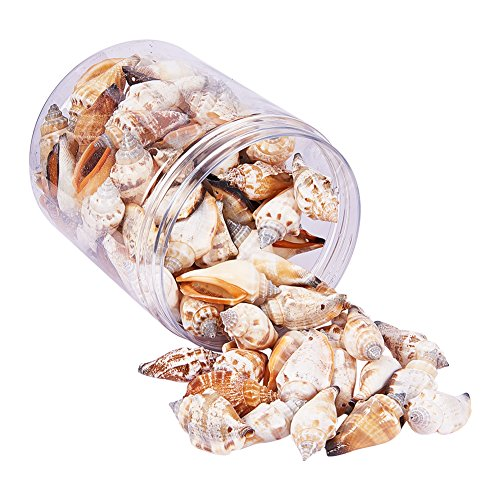 PH PandaHall 95-100Pcs Spiral Seashells Dyed Bead Charms with Hole for Bracelet Necklace Pendant Jewelry DIY Craft Making