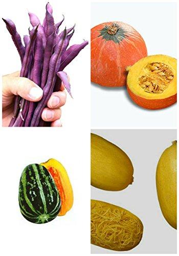 Germination 95% + 6 Groupes Pour Select Graines de fruits 4 en 1 Lot pour le jardin délicieux organique Sweet Home Garden 5